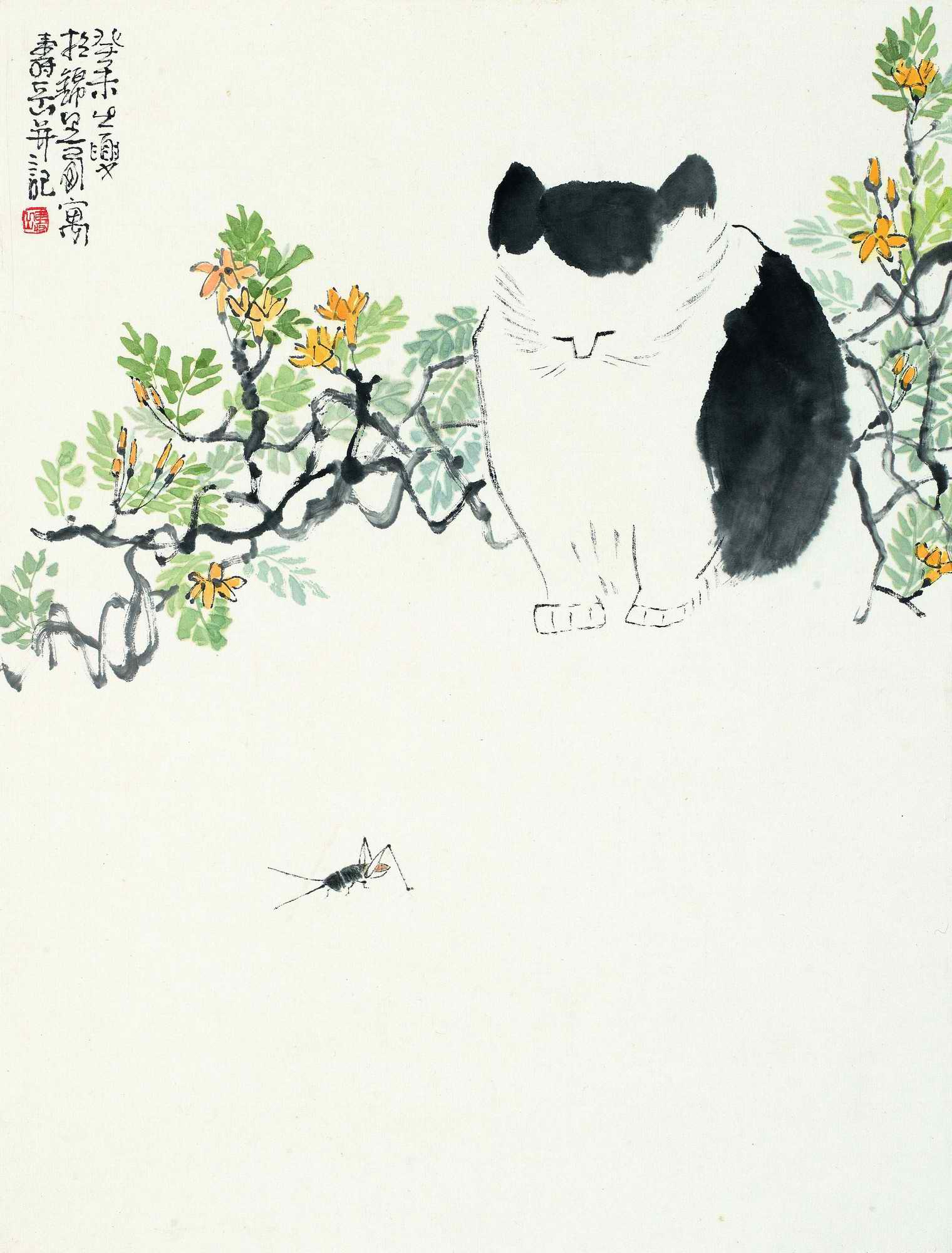 陈寿岳 猫