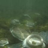 海捞瓷器鉴定的方法