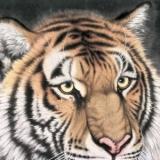 老虎画的摆放禁忌有哪些
